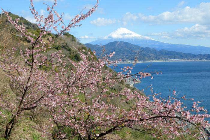 薩埵峠の春