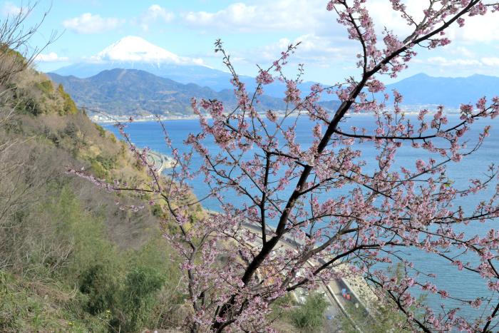 興津桜と富士山
