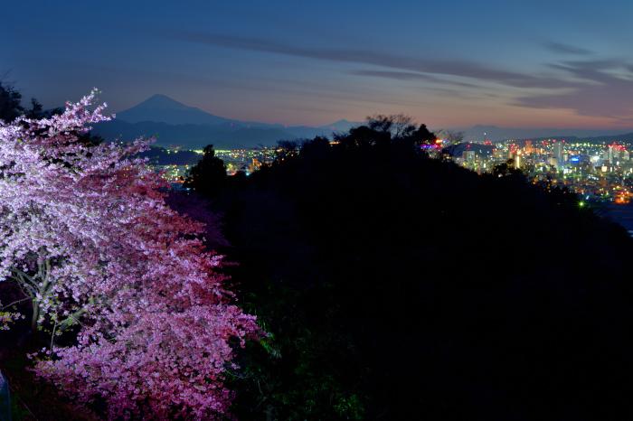 夜桜と静岡市夜景