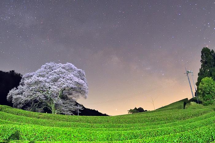 天の川横たわる茶畑