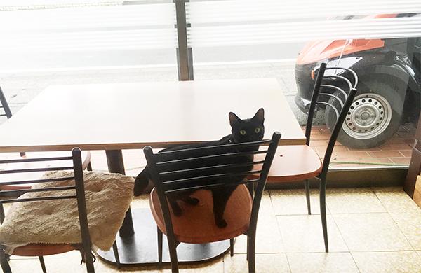 猫はキジトラと黒猫がいるようです