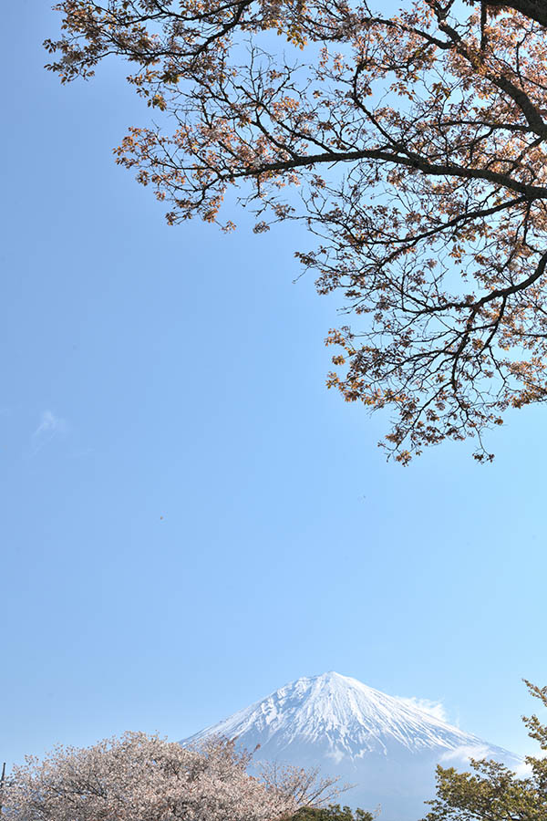 200410tanukiko_00001_03.jpg