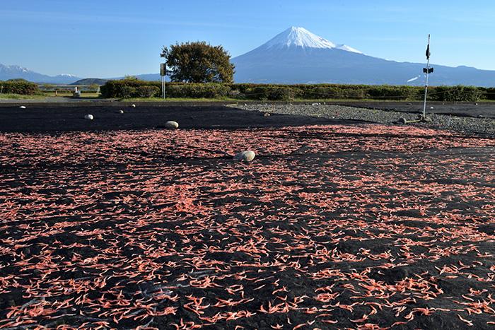 富士山と桜海老干し