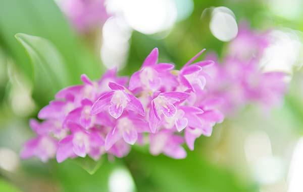 蘭の花さく