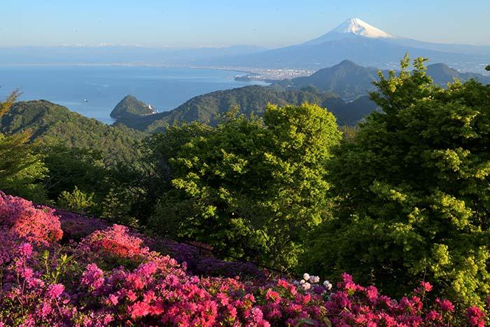 一目千本のツツジと駿河湾越しの富士山