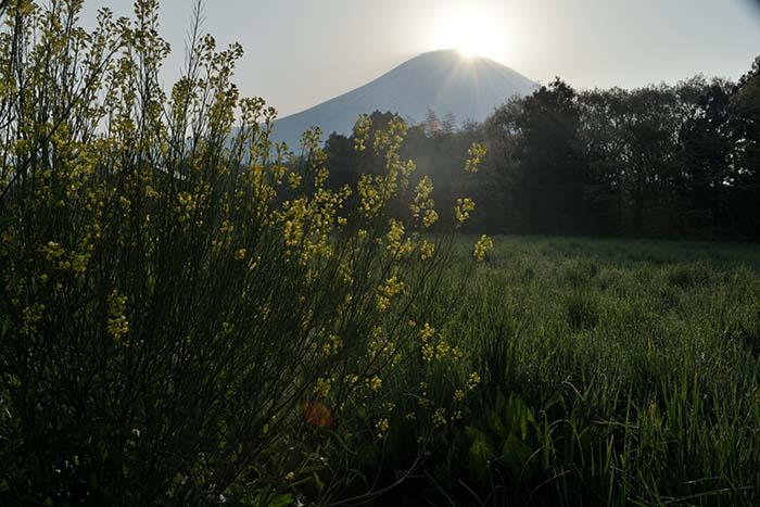 牧場地帯でダイヤモンド富士