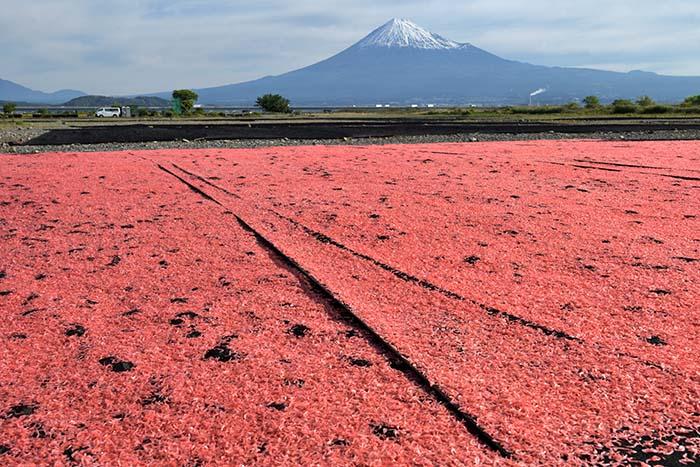 ピンクのじゅうたん