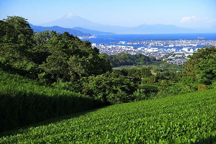 日本平旧道からの富士山