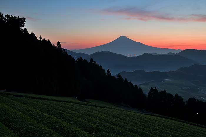 黎明の茜空と富士山と茶畑