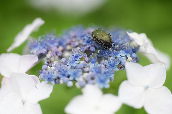 花粉をあびて