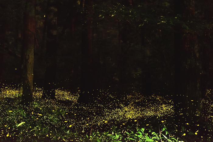 木霊との対話の時刻