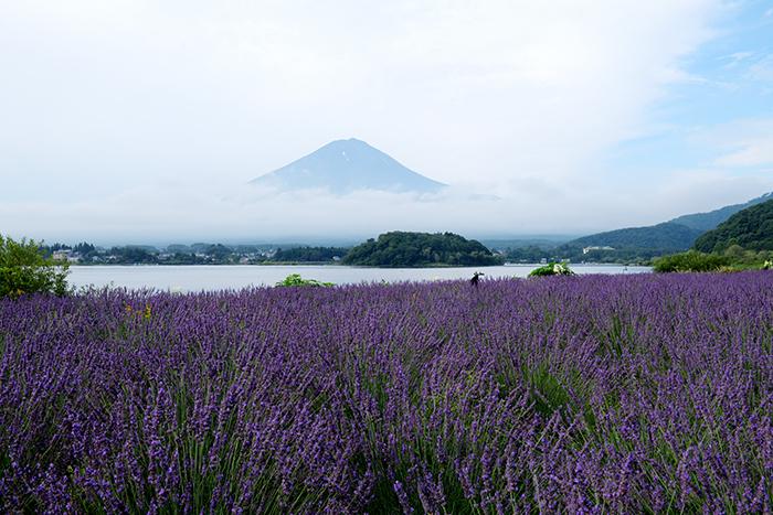 束の間の富士山とラベンダー畑