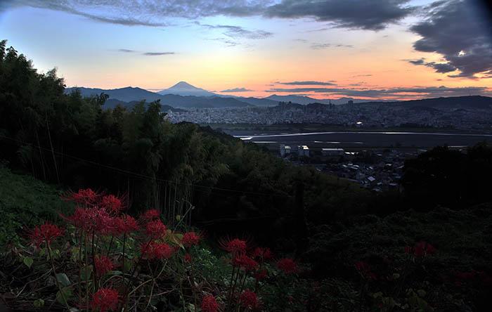 徳願寺と彼岸花