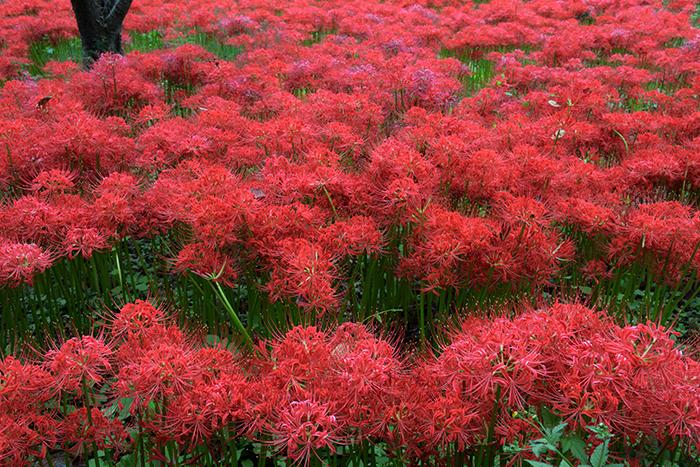 季節を告げる赤