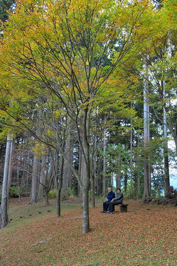 高山市民の森にたたずむ