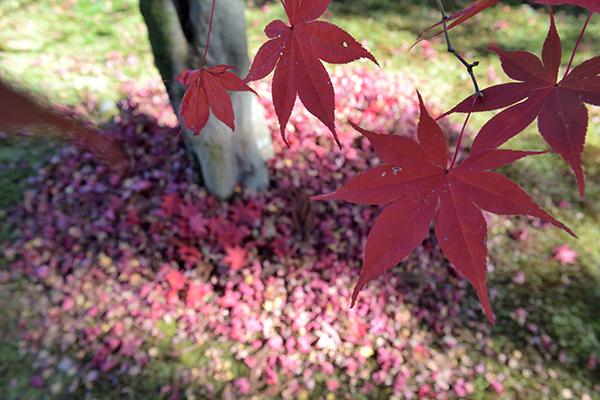 落ち葉が積もる季節