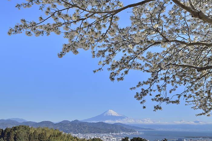 日本平富士遠望