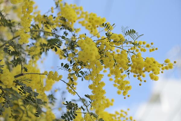 黄色のアクセント