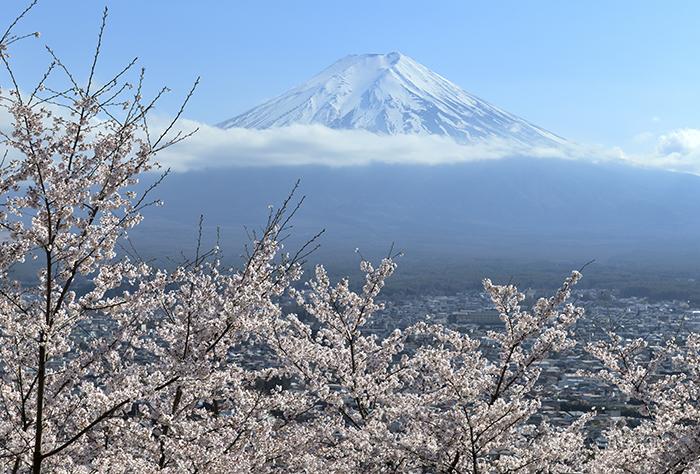 桜山からの富士山