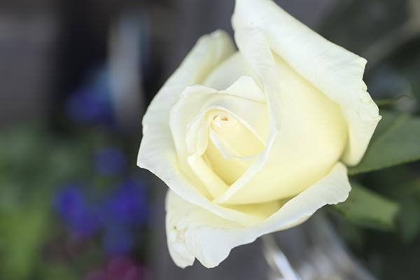 ananのバラ