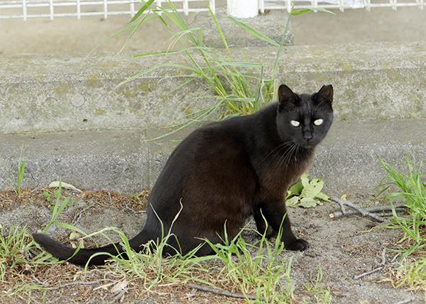 野良猫が多い公園でシアt