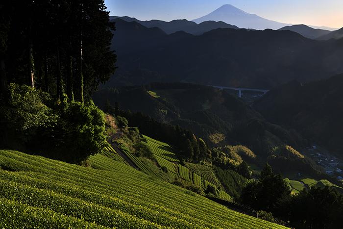 渓谷の茶畑