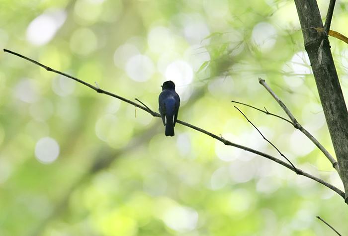 幸せな青い鳥