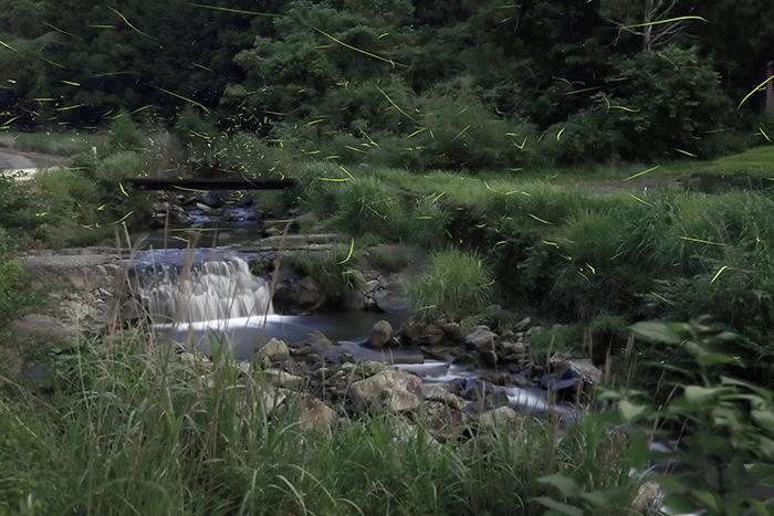 滝とホタル