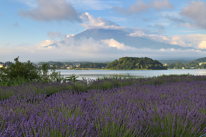 富士山頂はまだ雲の中
