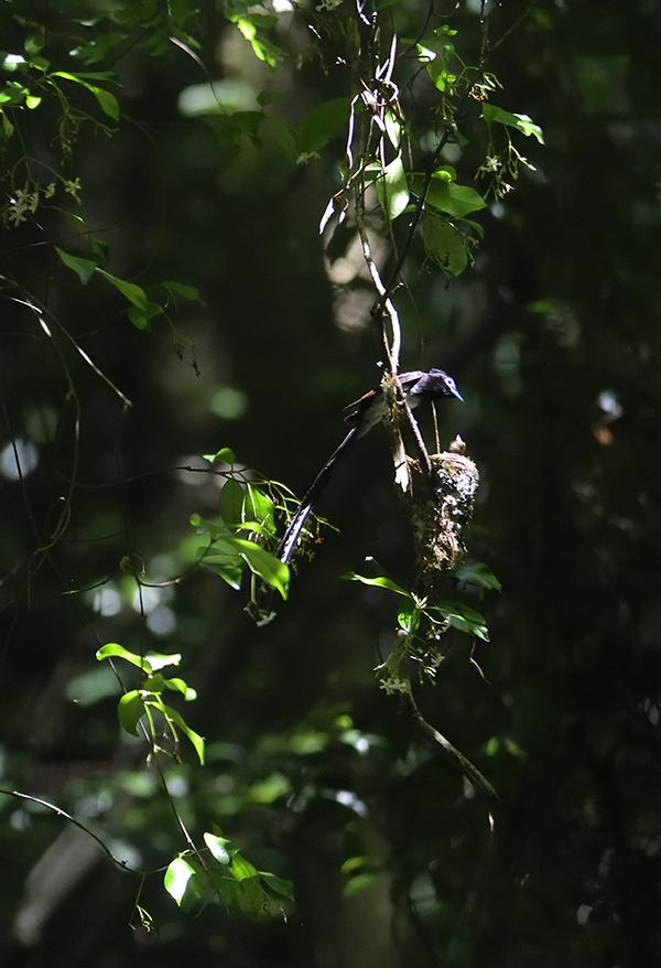 雛に餌をやる親鳥