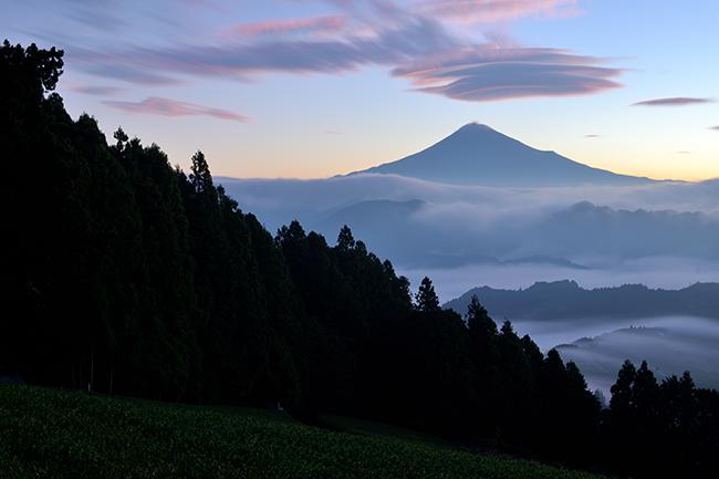 秋の茶畑の風景
