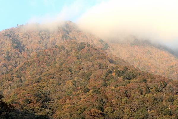 峠頂上付近は紅葉していました