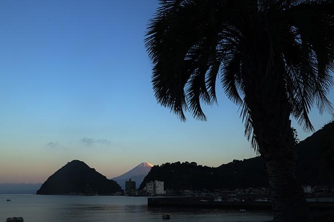 パームツリー越しの富士山