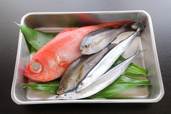 新鮮な魚を食べられる宿