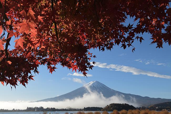 坂巻く雲海と紅葉