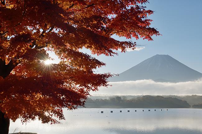 樹幹からの日の出