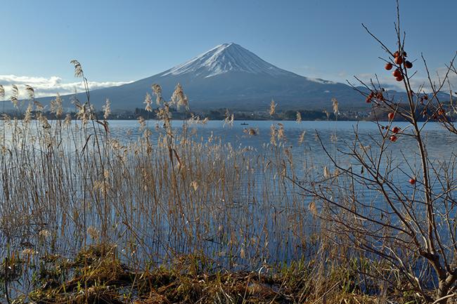 熟柿と富士山