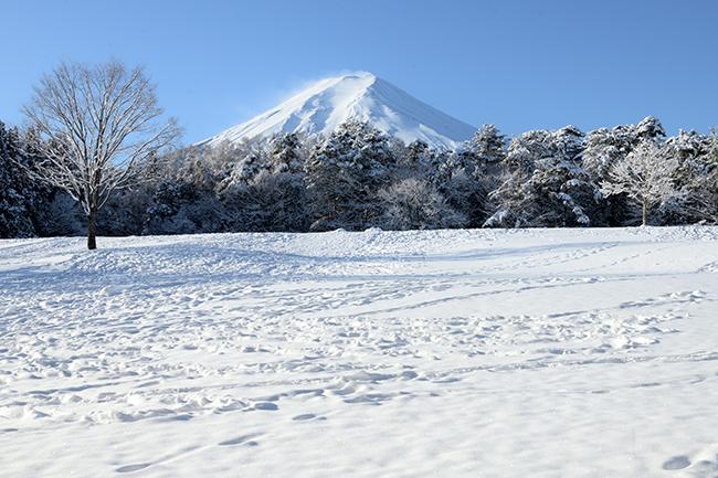 冬木立の雪原